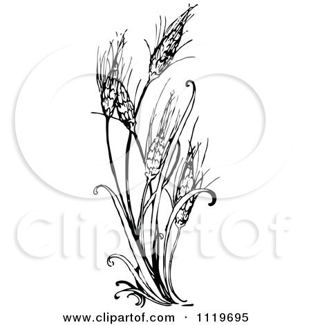 Pin on future body. Wheat clipart vintage