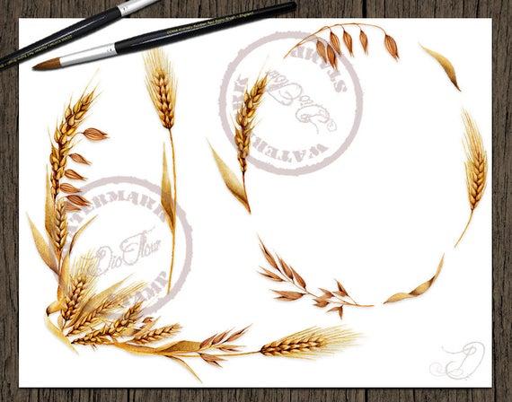 Oat clip art barley. Wheat clipart watercolor