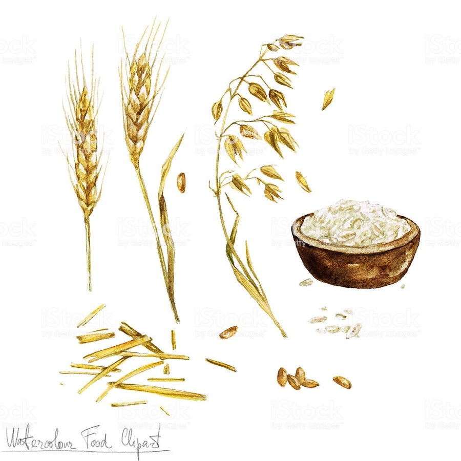 Download oats oatmeal clip. Wheat clipart watercolor