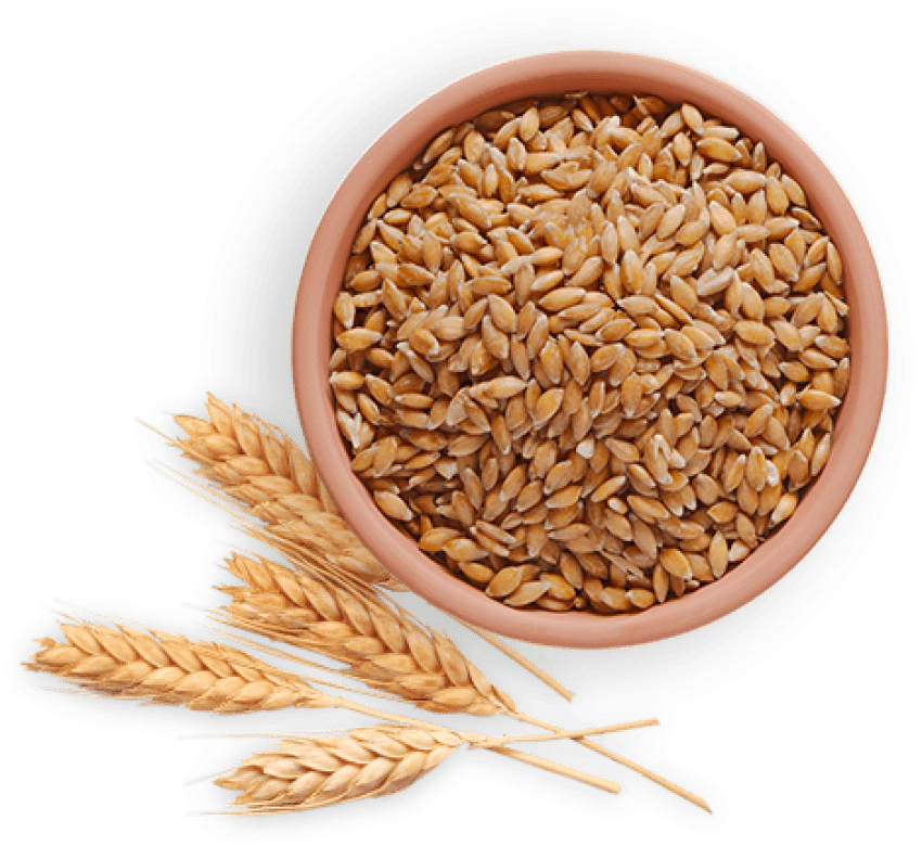 Png free images toppng. Wheat clipart wheat bread