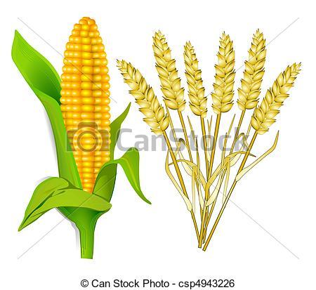 wheat clipart wheat corn