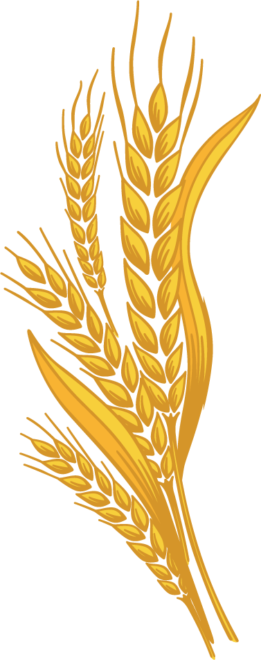 Wheat clipart wheat corn. Png images free download