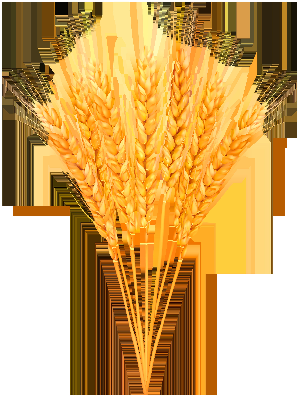 Ripe classes png clip. Wheat clipart wheat crop