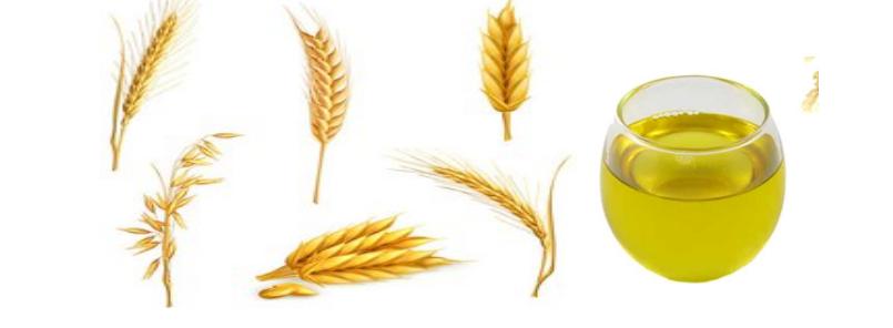 Free download clip art. Wheat clipart wheat germ