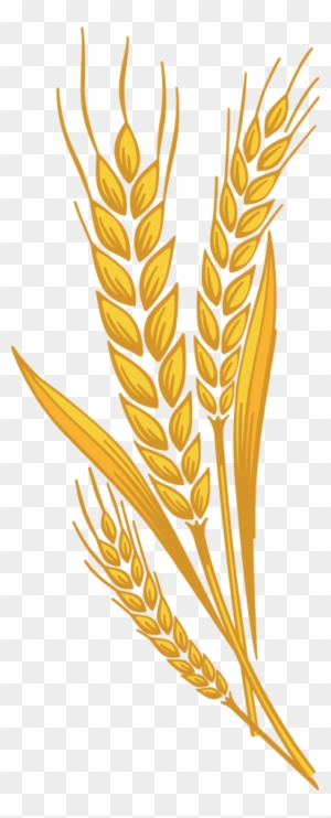 Wheat clipart wheat harvest. Transparent png images free