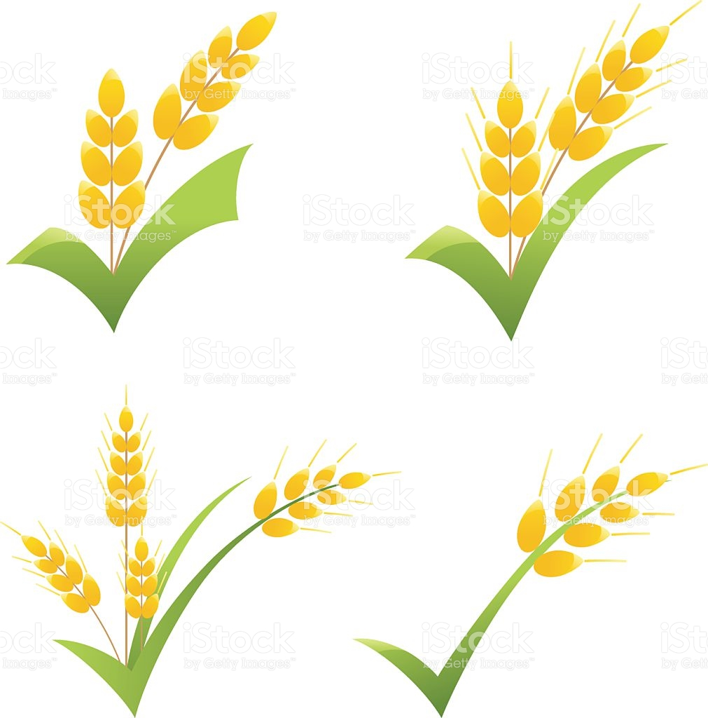Wheat clipart wheat leaves. Leaf x free clip