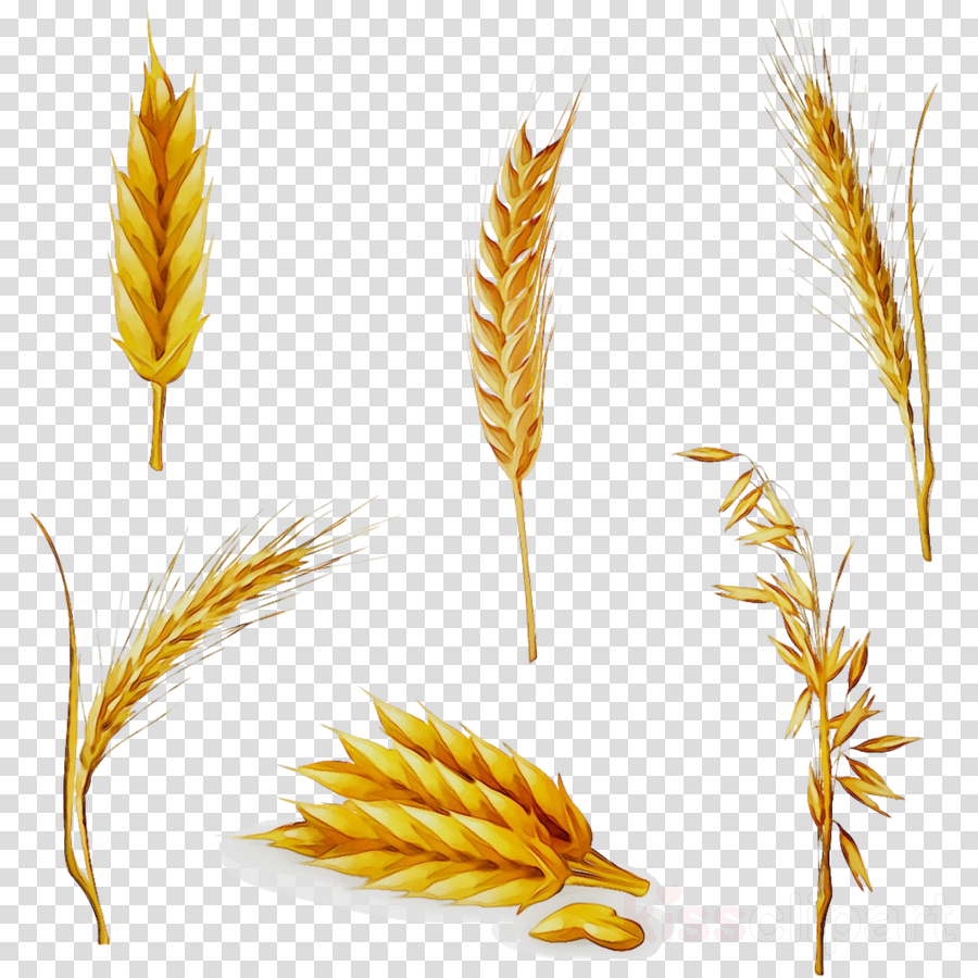 Wheat clipart wheat leaves. Cartoon plant leaf transparent