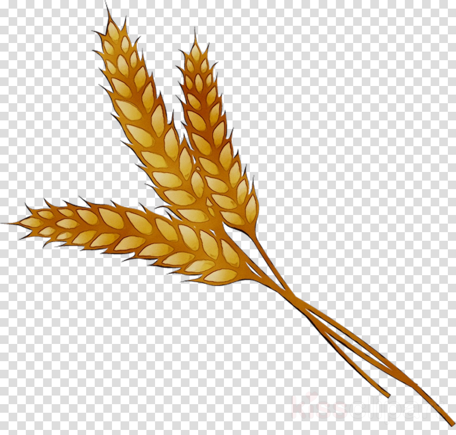 Cartoon plant leaf transparent. Wheat clipart wheat leaves