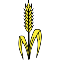 clipartlook. Wheat clipart wheat leaves