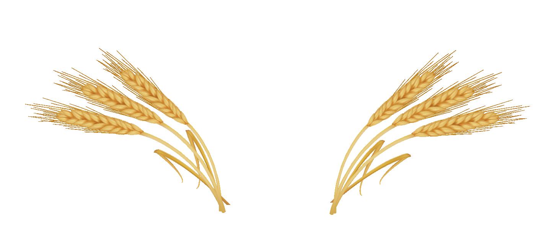 Wheat clipart wheat shock.  grain ear huge