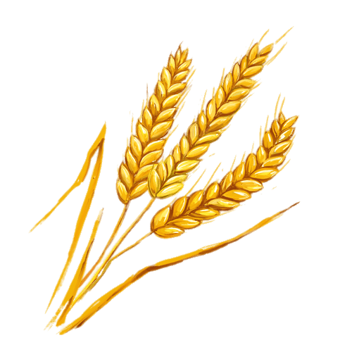Wheat clipart wheat spike. Spikes illustration transparent png