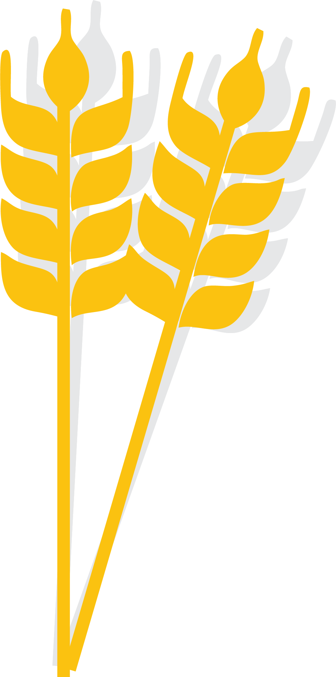 Wheat clipart wheat spike. Rice cartoon icon gold