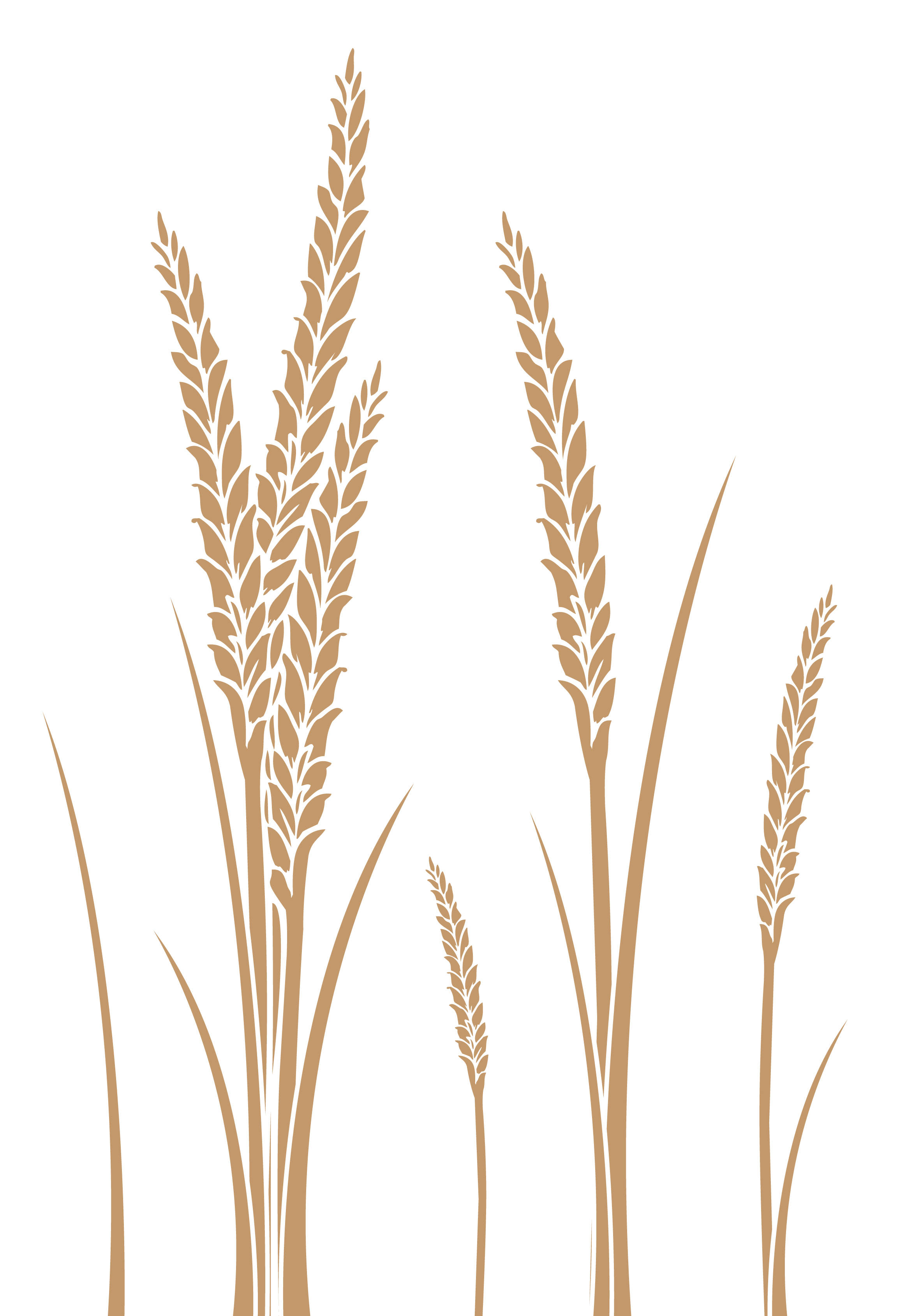 Wheat clipart wheat stem. Free vector download clip