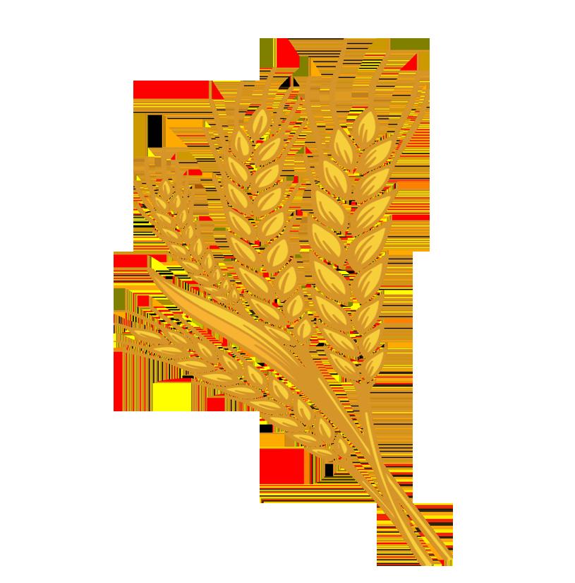 Guru kirpa atta flavour. Wheat clipart wheat stock
