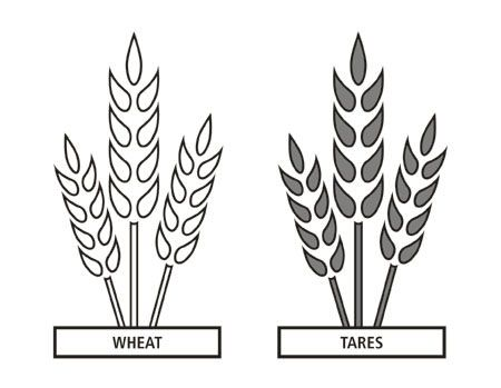 Wheat clipart wheat tares. And seminary doctrine covenants