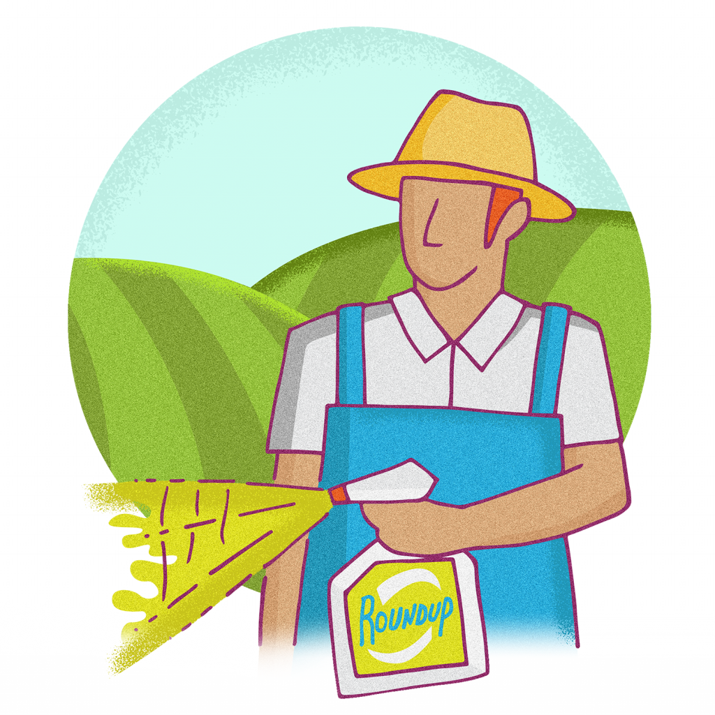 Roundup glyphosate and cancer. Wheat clipart wheat tares