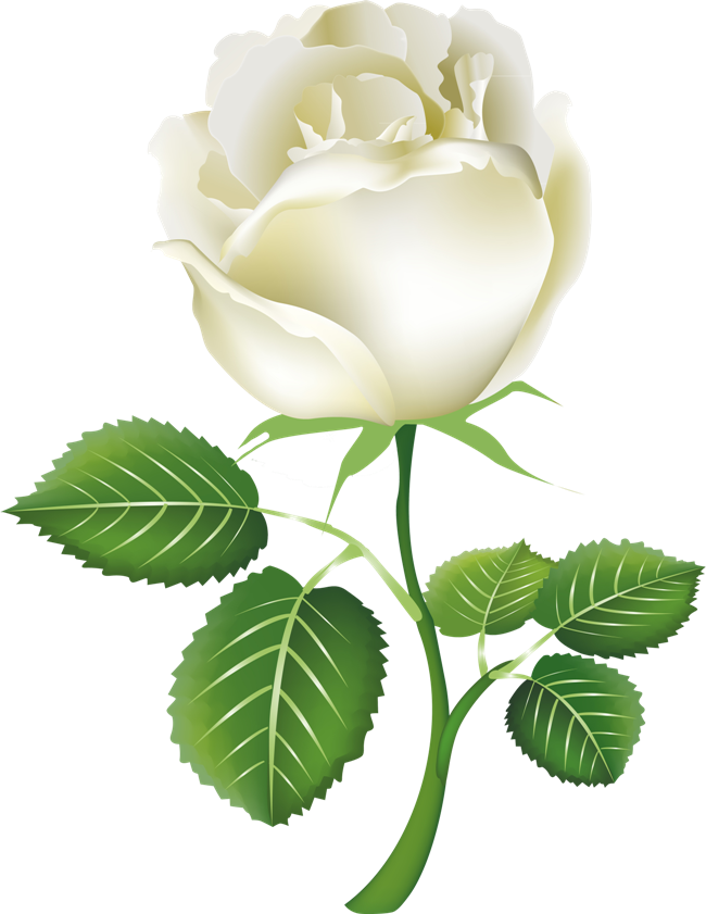 Png free download whiteroseclipart. White clipart rose