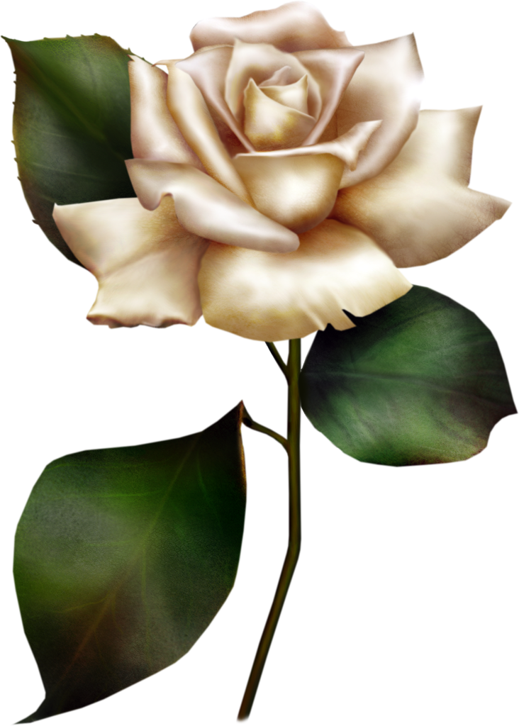 White clipart rose. Painted gallery yopriceville high