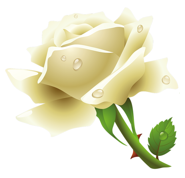 Roses image purepng free. White flower clipart png