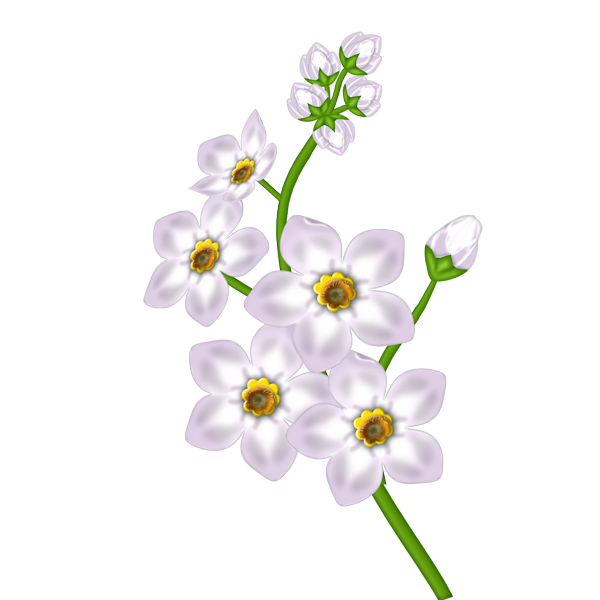 Transparent gallery yopriceville high. White flower clipart png