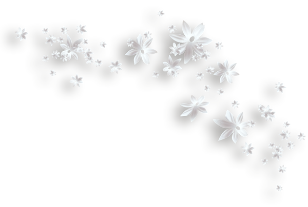 Flowers decorative pozadia a. White flower clipart png