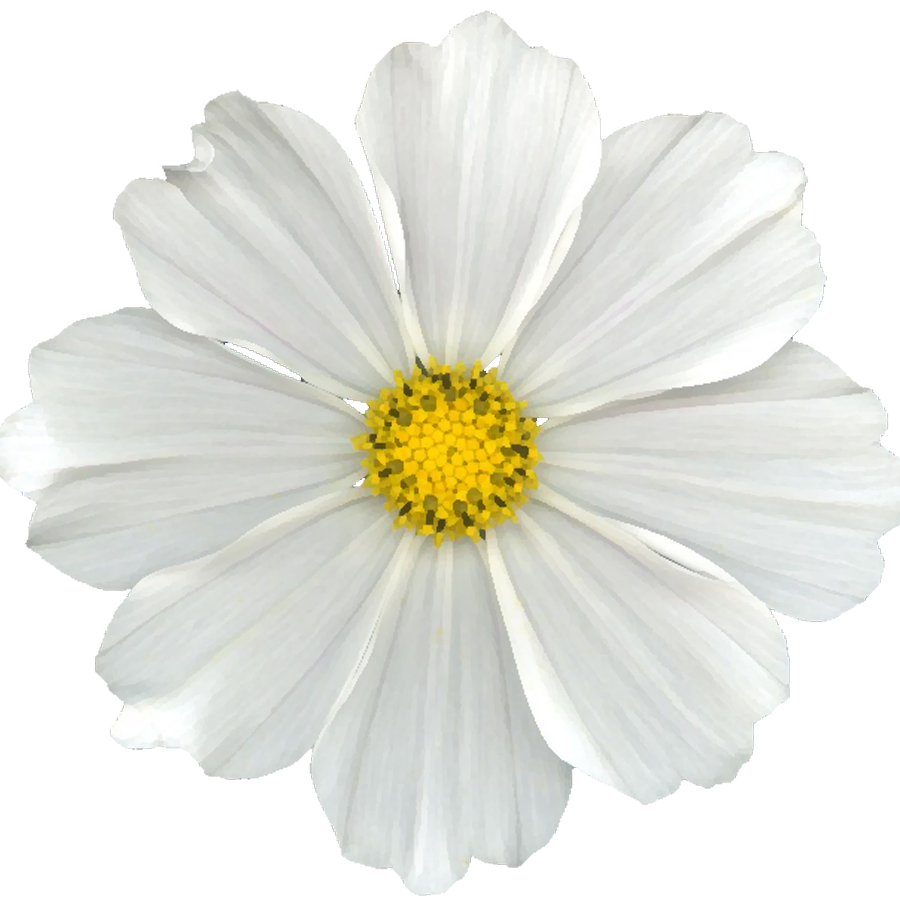 Cuz i can free. White flower png