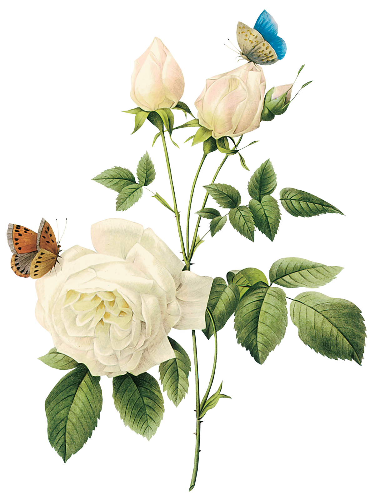 for free download. White flower png