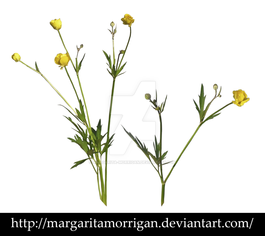 Wildflowers transparent images pluspng. Wild flower png