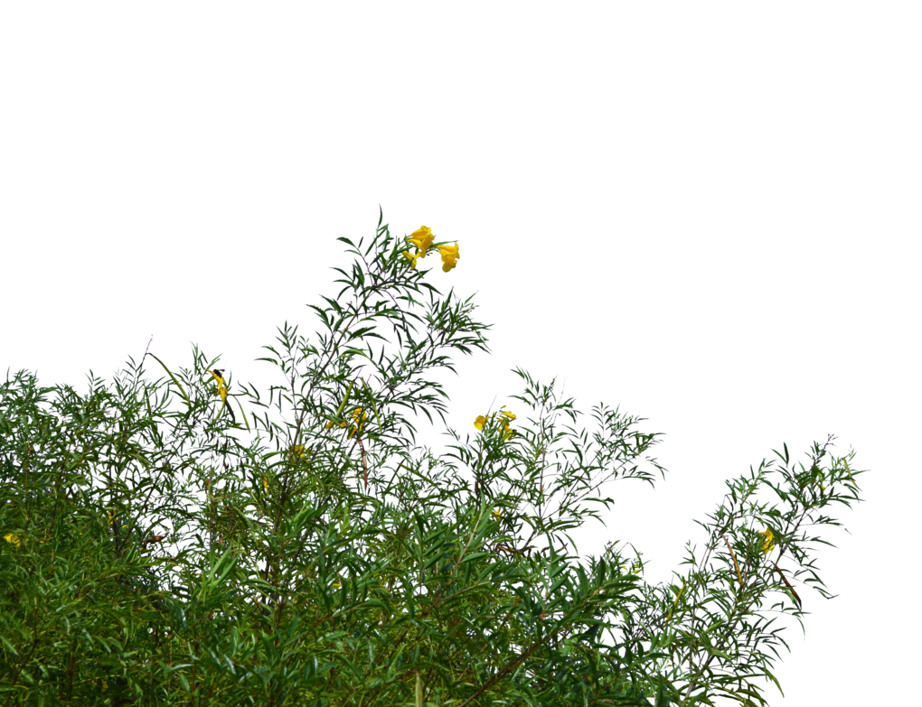 Flowers and grass stock. Wild flower png