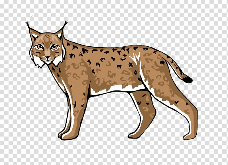 Lynx cougar transparent background. Wildcat clipart cheetah