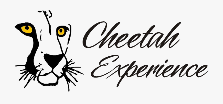 Wildcat clipart cheetah. Free cliparts