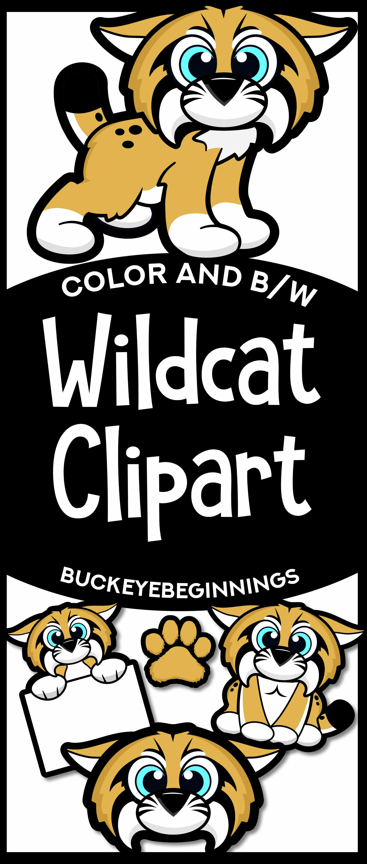 Wildcat clipart cute. Clip art squishies