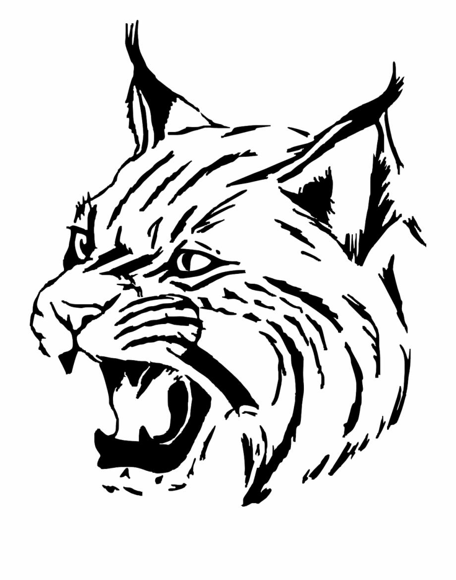 Tiger cat head face. Wildcat clipart drawing