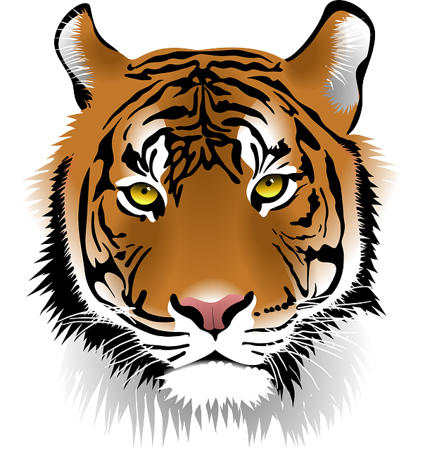 Sumatran tiger clipground free. Wildcat clipart face