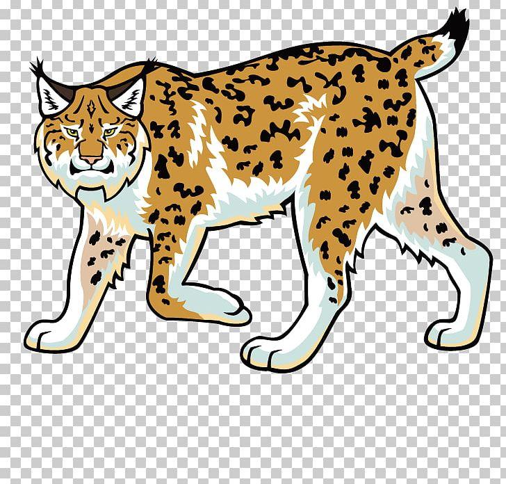 Eurasian bobcat felidae png. Wildcat clipart lynx