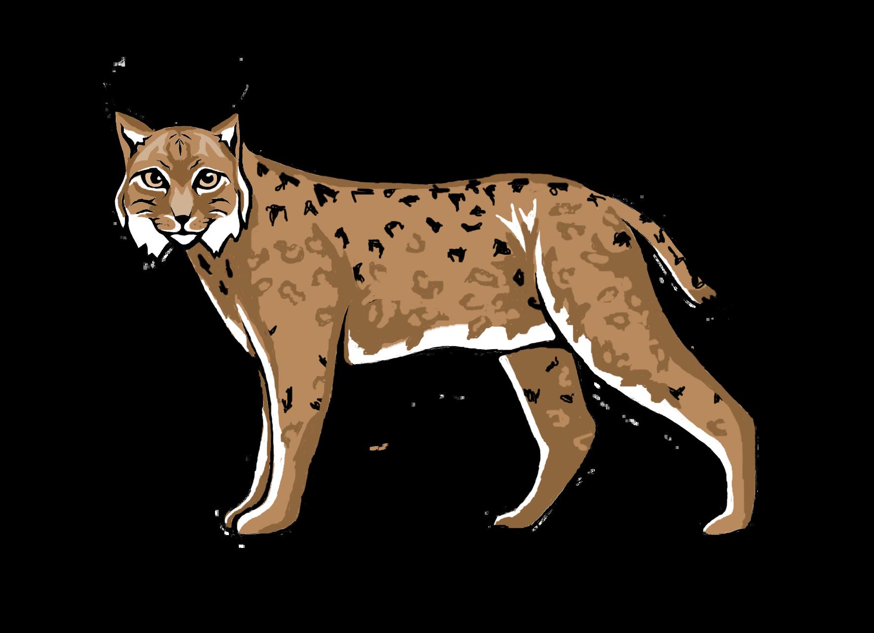 Geogame finde vielfalt simulation. Wildcat clipart lynx