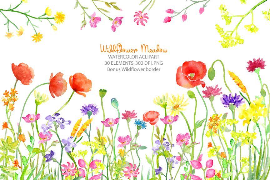Watercolor meadow w design. Wildflower clipart