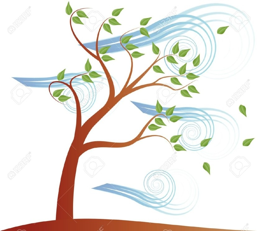 Tree . Windy clipart today's