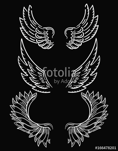 Set of wings collection. Wing clipart abstract