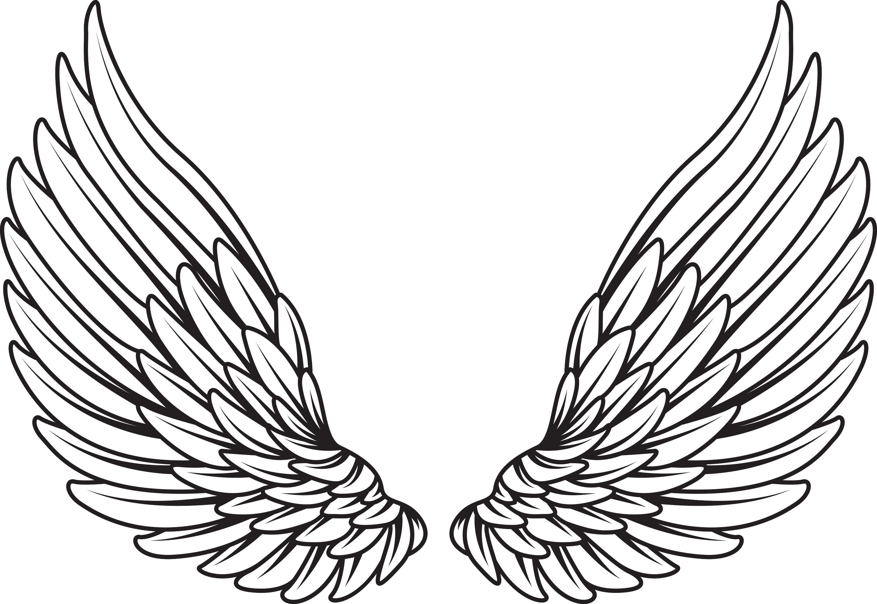 Pin by kyle grissom. Wing clipart animal wing