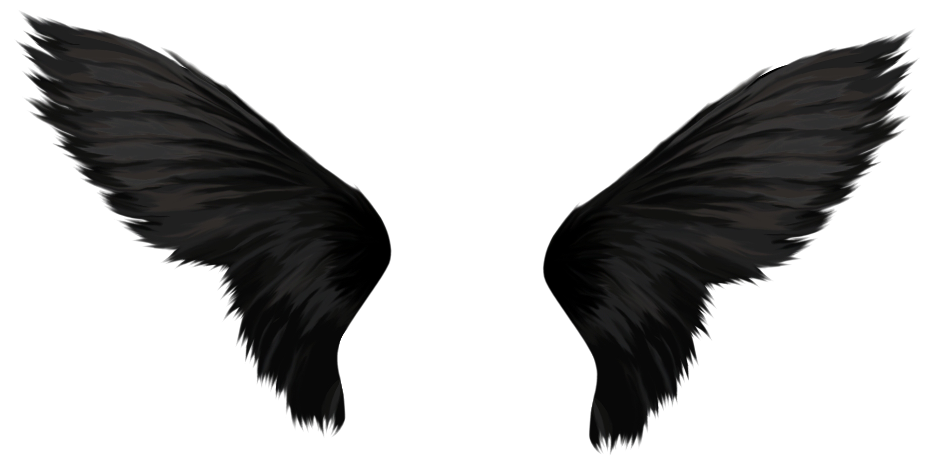 Wings png images free. Wing clipart bird wing