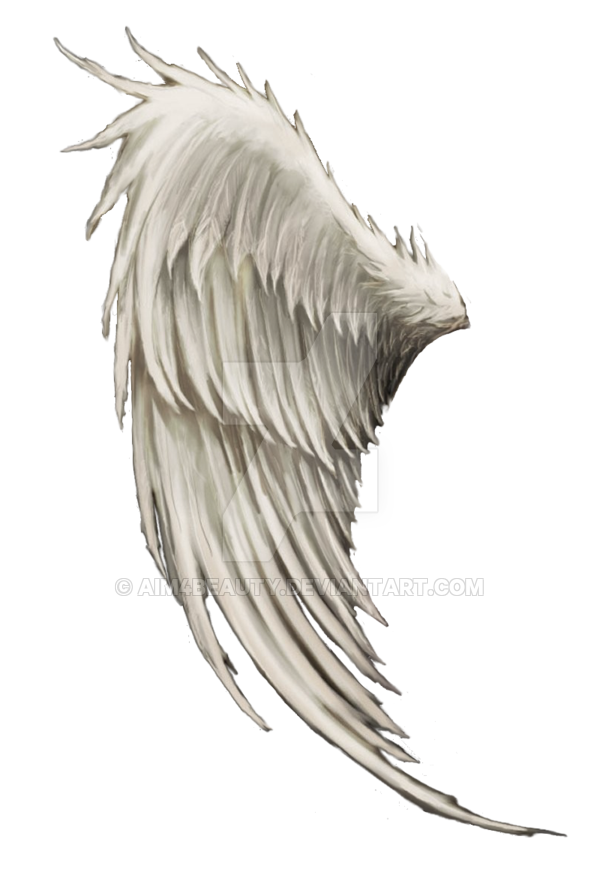 Wing clipart bird wing. Exotic angel or fantasy