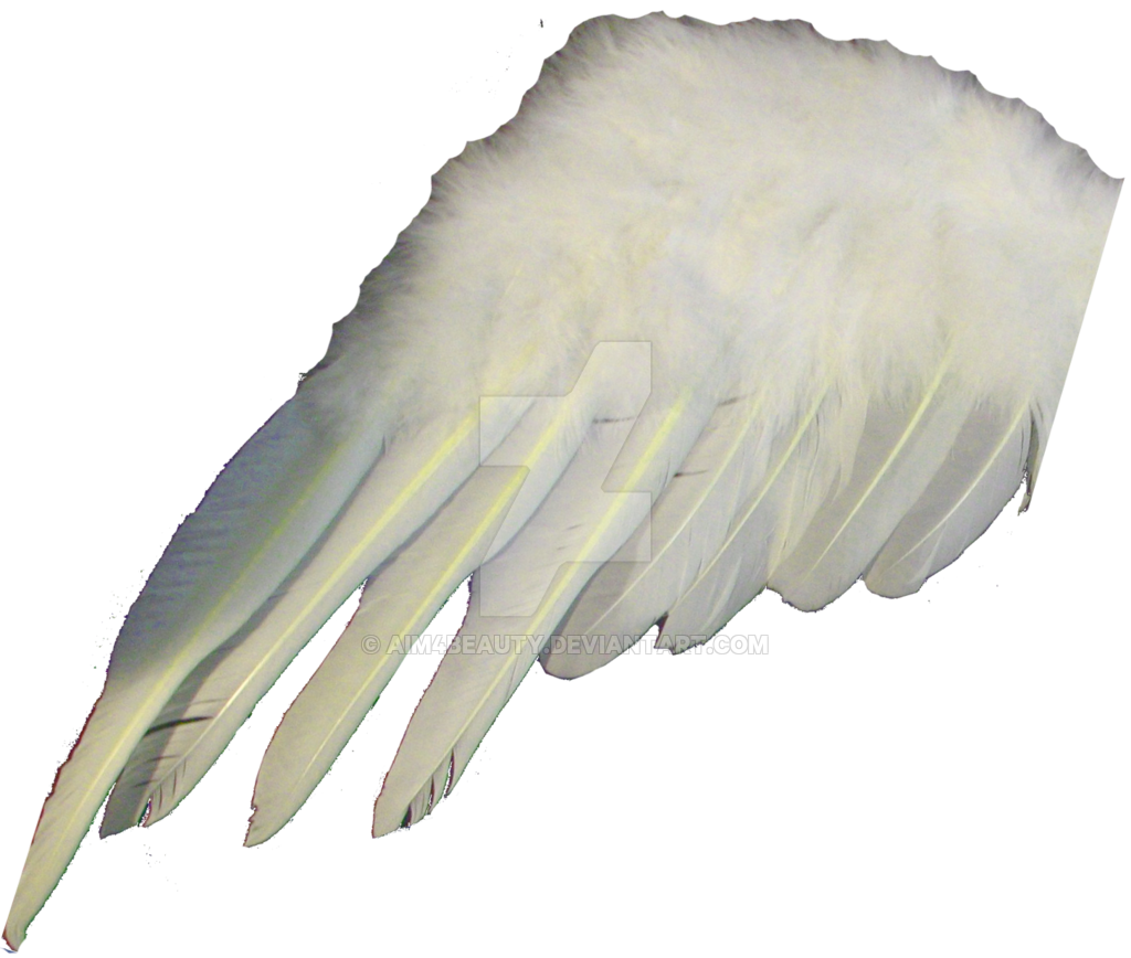 Angel or by aim. Wing clipart bird wing