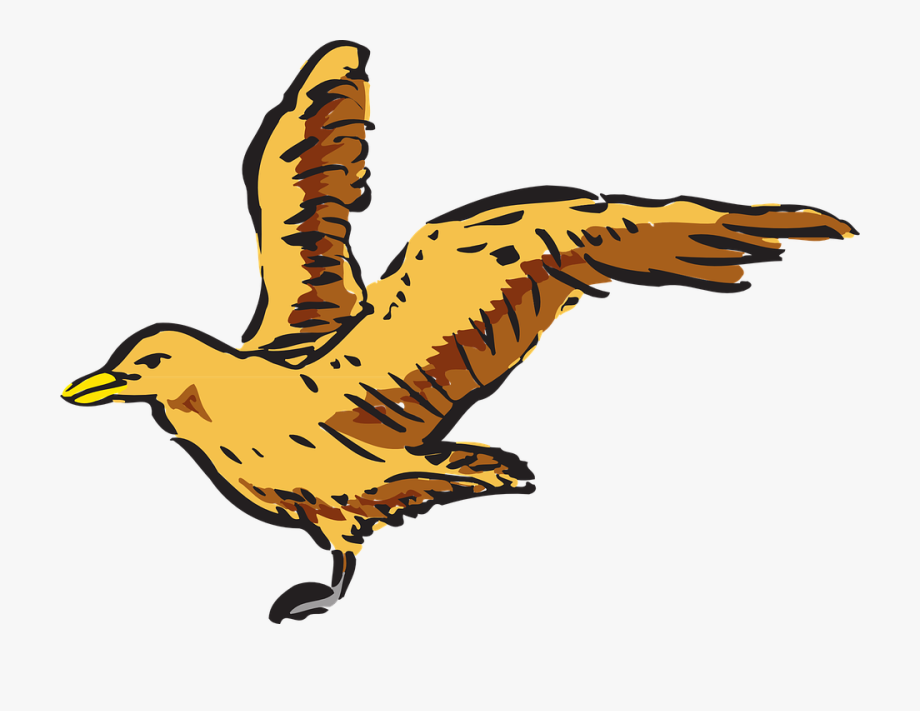 Wing clipart bird's. View bird flying wings