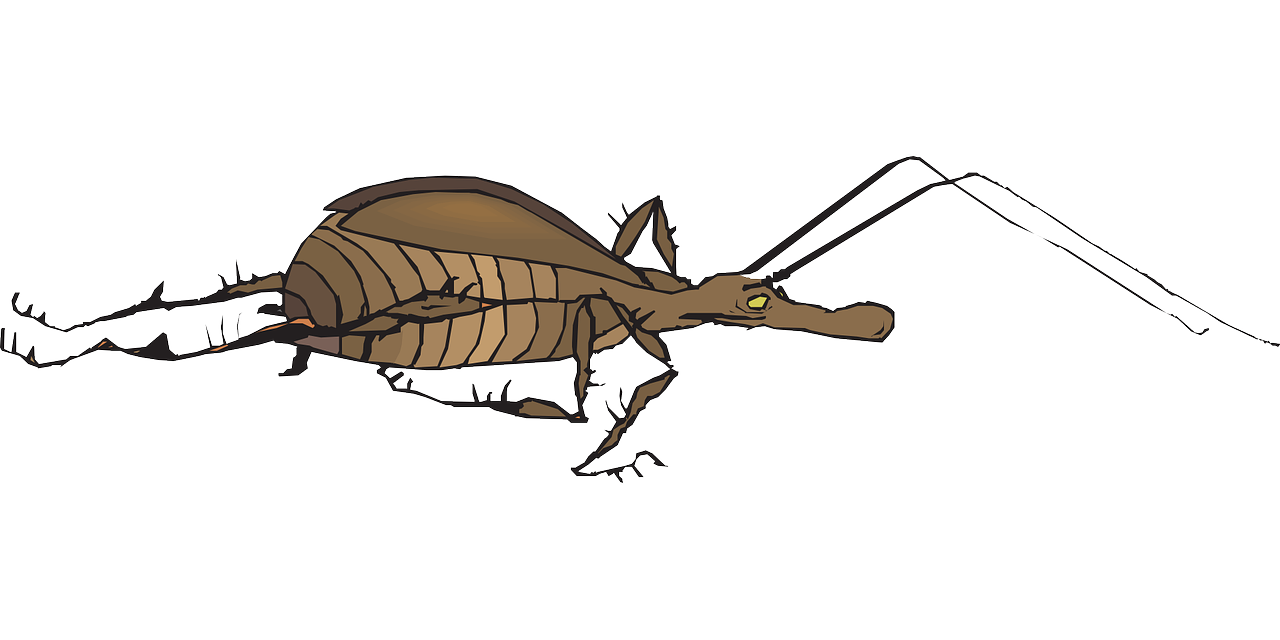 Wing clipart bug. Antenna wings insect fast