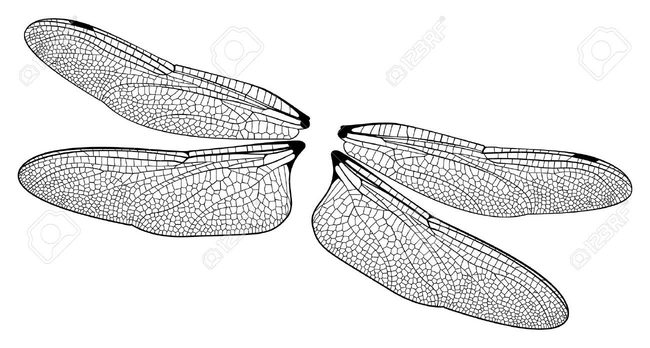 Wing clipart bug. Awesome dragonfly wings stamps