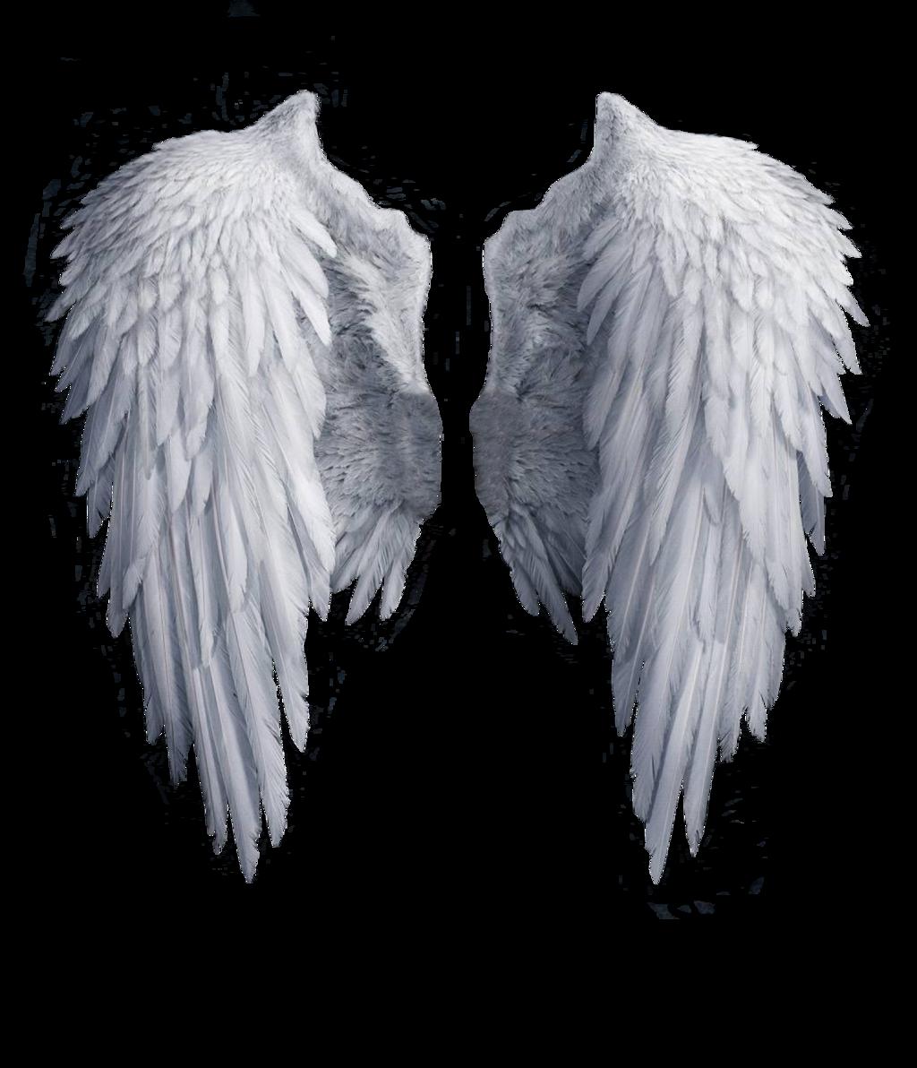 White angel png wattpad. Wing clipart cupid wings
