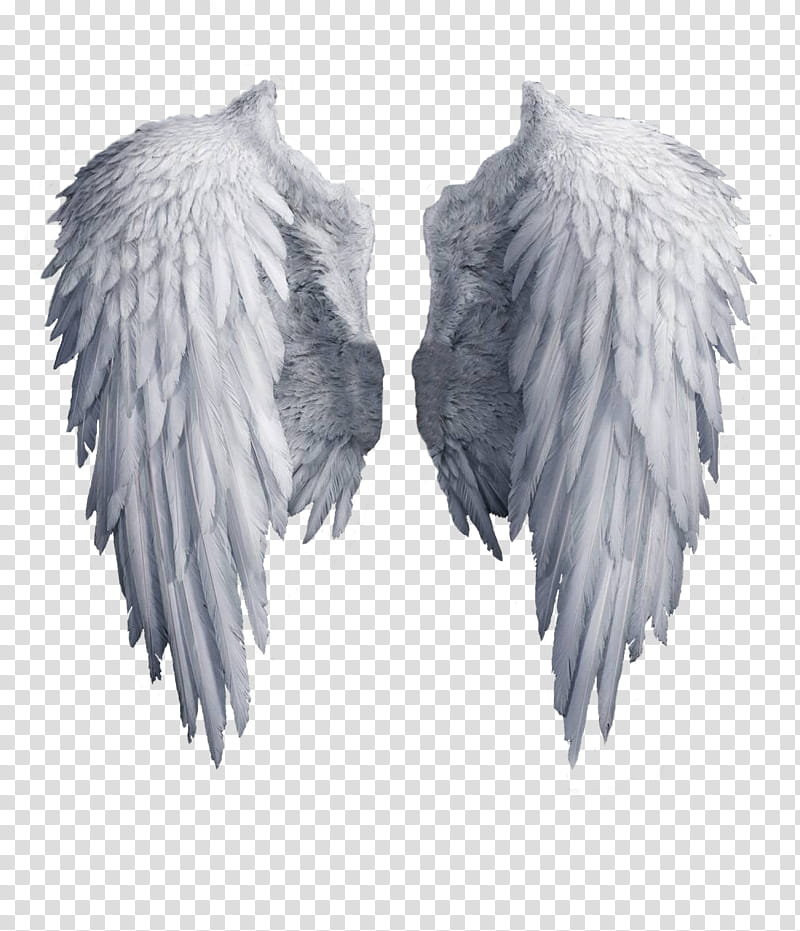 Angel white transparent background. Wing clipart cupid wings