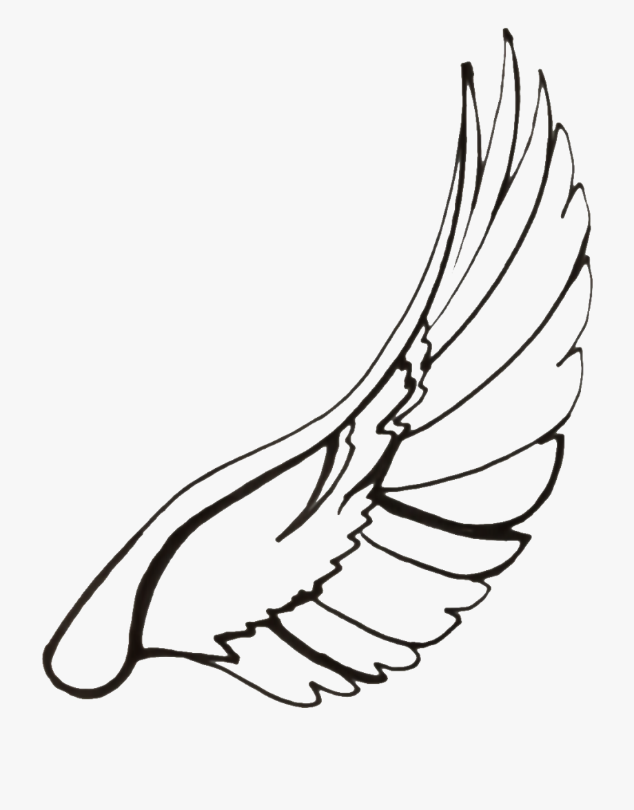 Wing clipart dove wing. Wings google search wonderful
