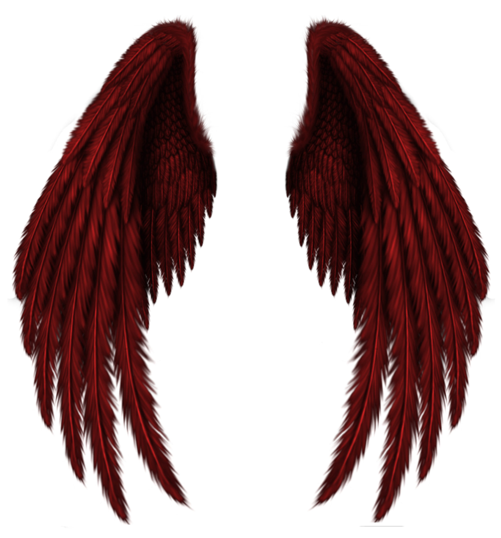 Transparent red wings png. Wing clipart feather wing